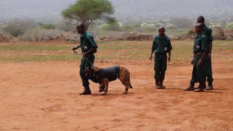 anti poaching clause Restrictive covenants provisions afford greater protection to the employer in order for restrictive covenants to be enforceable they must protect a legitimate interest of the employer and must extend no further than reasonably necessary to protect that interest this non-poaching covenant clause prevents the employee from enticing away his/her former colleagues.